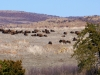 wichita-mountains-wildlife-reservation-oklahoma-6